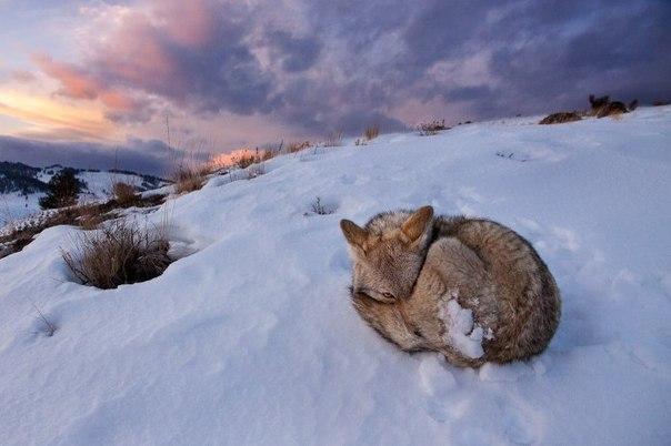 В январе 2010, в usgs заявили, что подъем йеллоустонской кальдеры замедлился значительно и что подъем продолжается