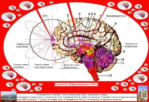 Теория светлого пятна как механизм сознания создана