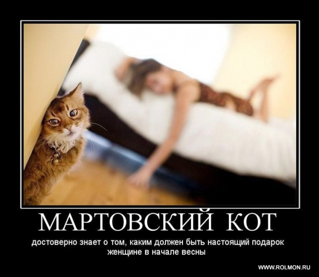 martovskiy-kot-peterburg-intim