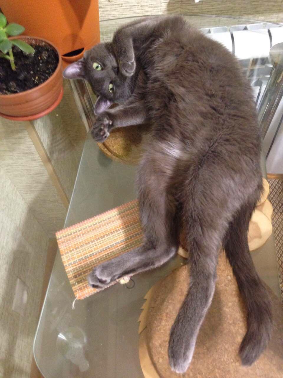 знакомства мартовские коты