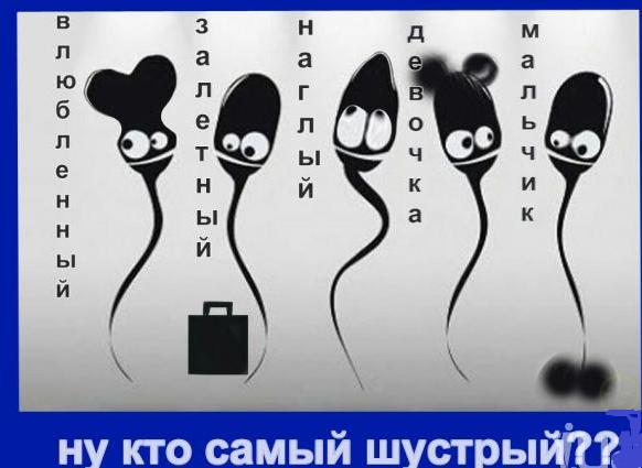motivatori-so-spermatozoidami