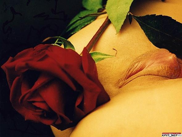 Секс цветы фото 30851 фотография