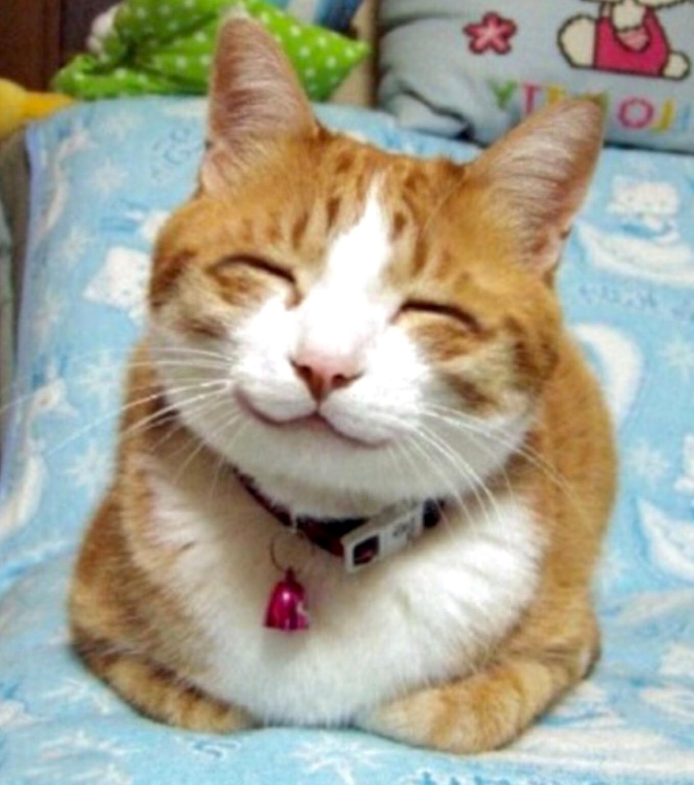 довольные котята фото