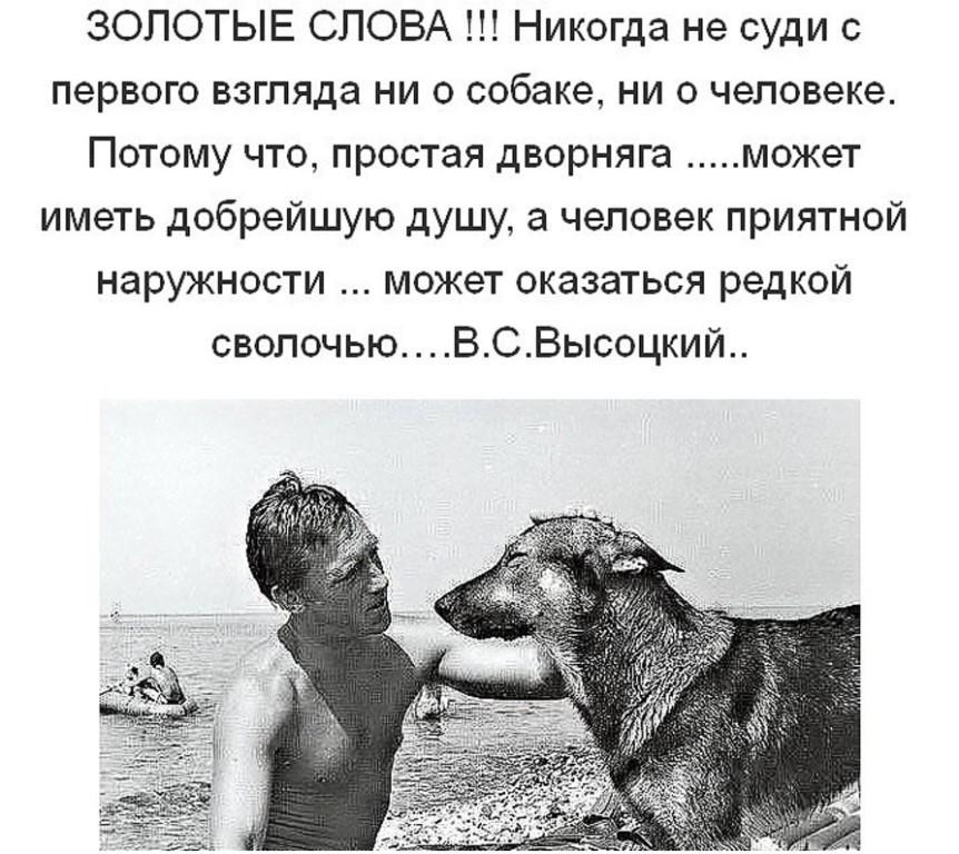 У нас вы найдете лучшие цитаты и высказываниях про собак.