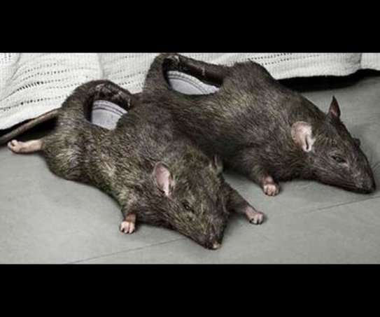 Домашние тапочки в виде крыс