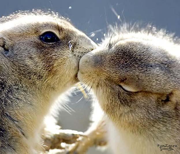 Картинки по запросу страстный поцелуй