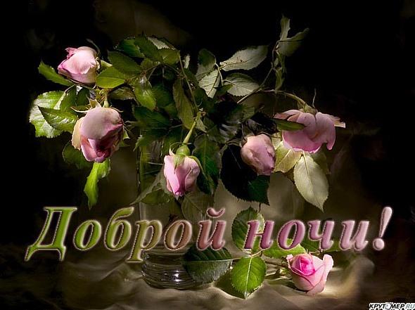 Сладких снов розы