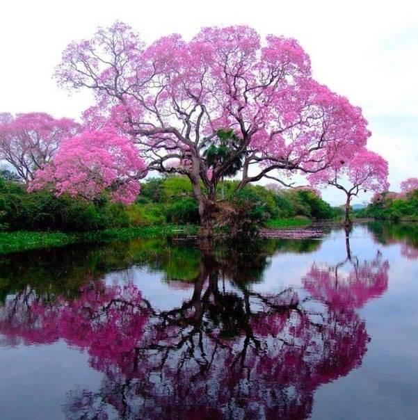 Деревья из цветов фото