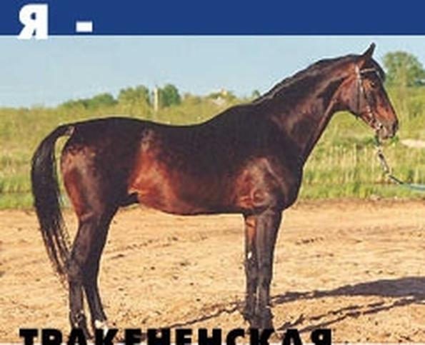 тест какая ты лошадь с картинками
