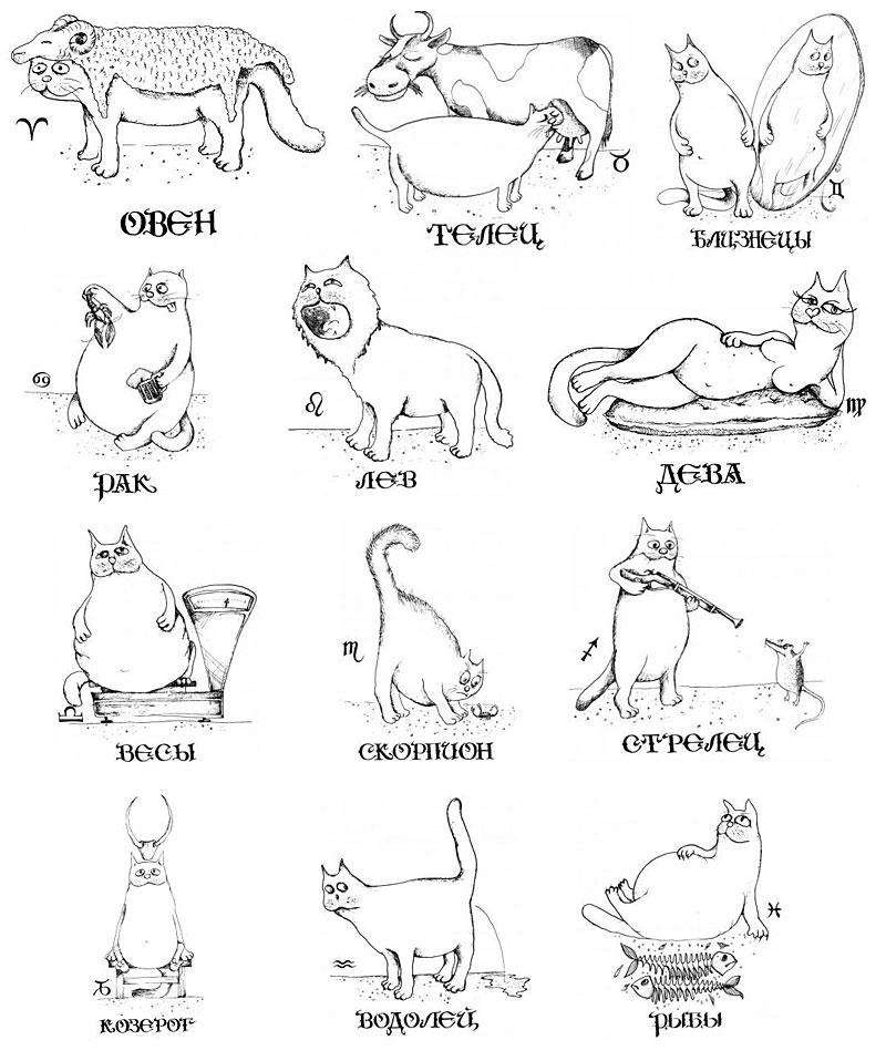 официально, это смешные картинки про знаки зодиака показывает