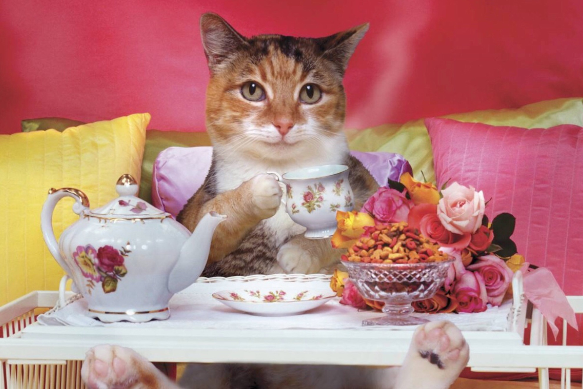 Картинки кошки доброе утро приколы картинки