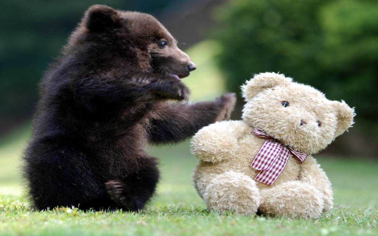 картинки с медвежатами добрые и милые потом построят
