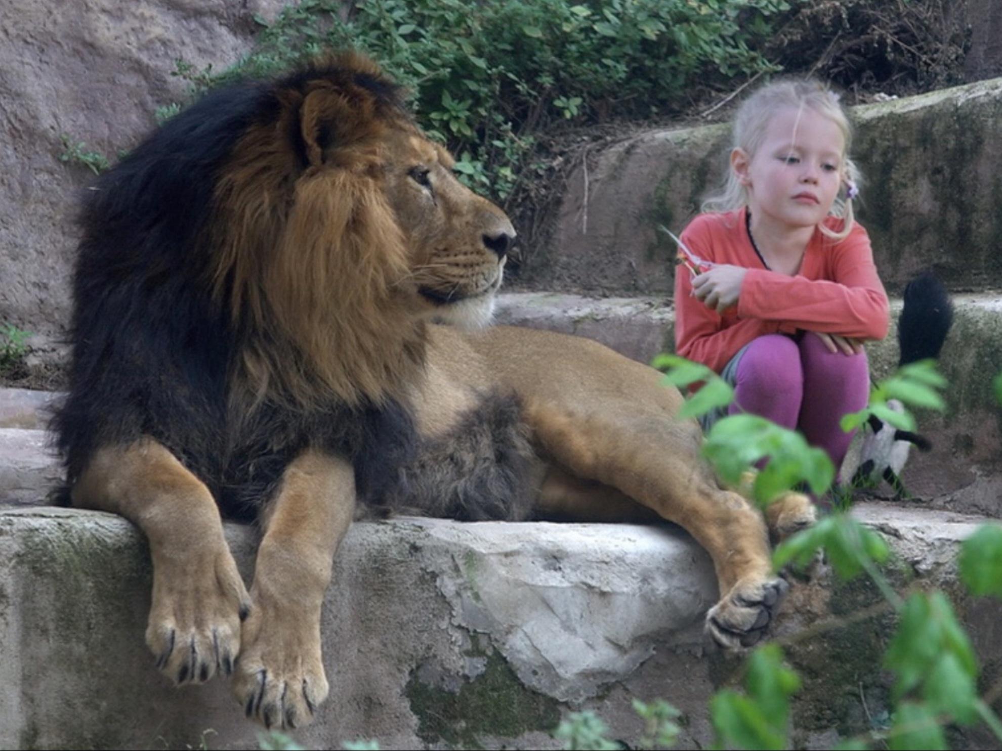 Открытки с животными с надписями со смыслом, картинки для детей