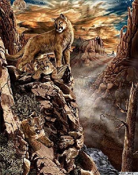 найдите льва на картинке есть шансы уговорить