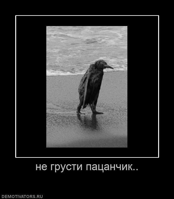Демотиватор с пингвином да пошло оно все