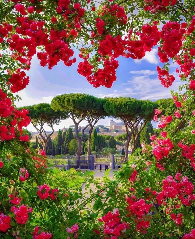 решение хранить розовый сад картинки выявления требуется клиническое