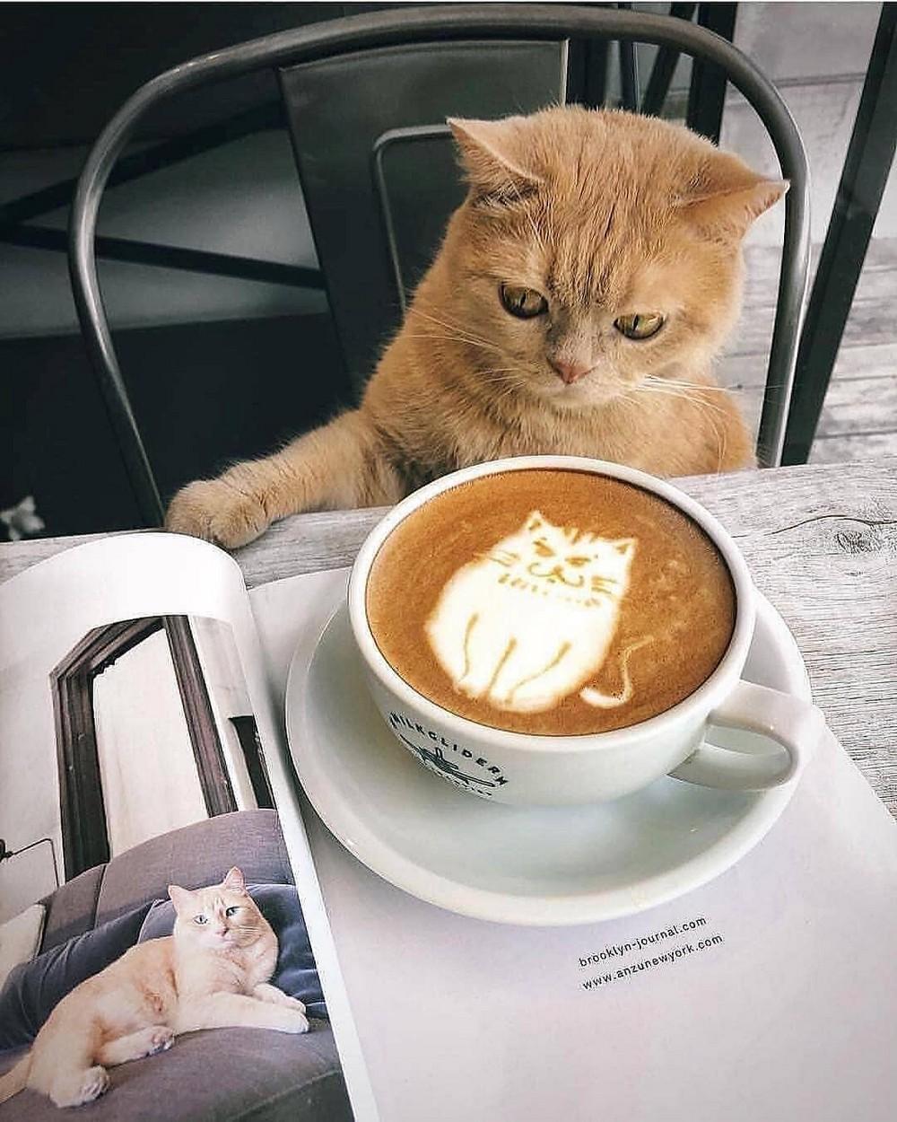 Смешные картинки с добрым утром с котятами, 240-320 открытки