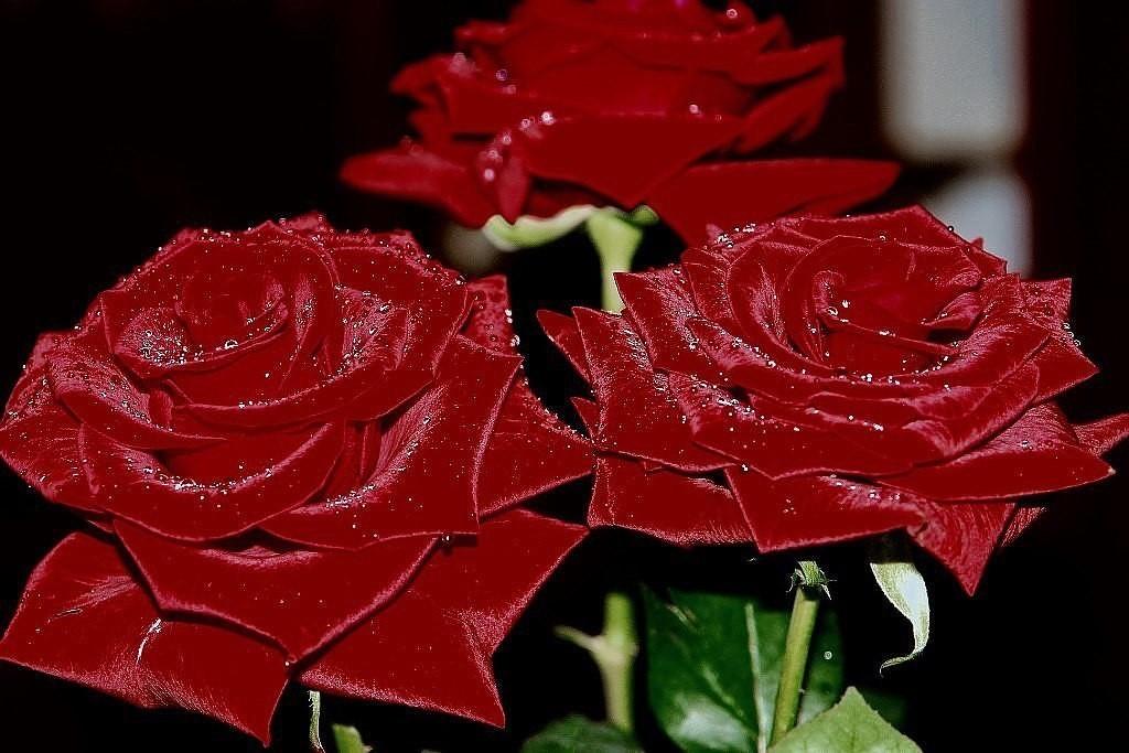 Гифки самые красивые цветы для красивой женщины