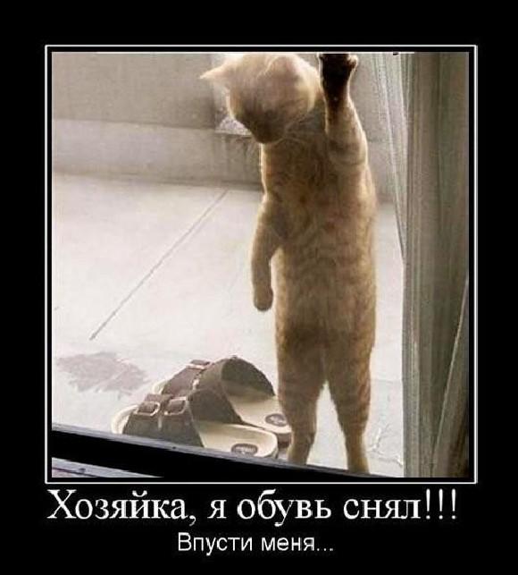 Демотиваторы дорогой ты кота впустил эту эпоху