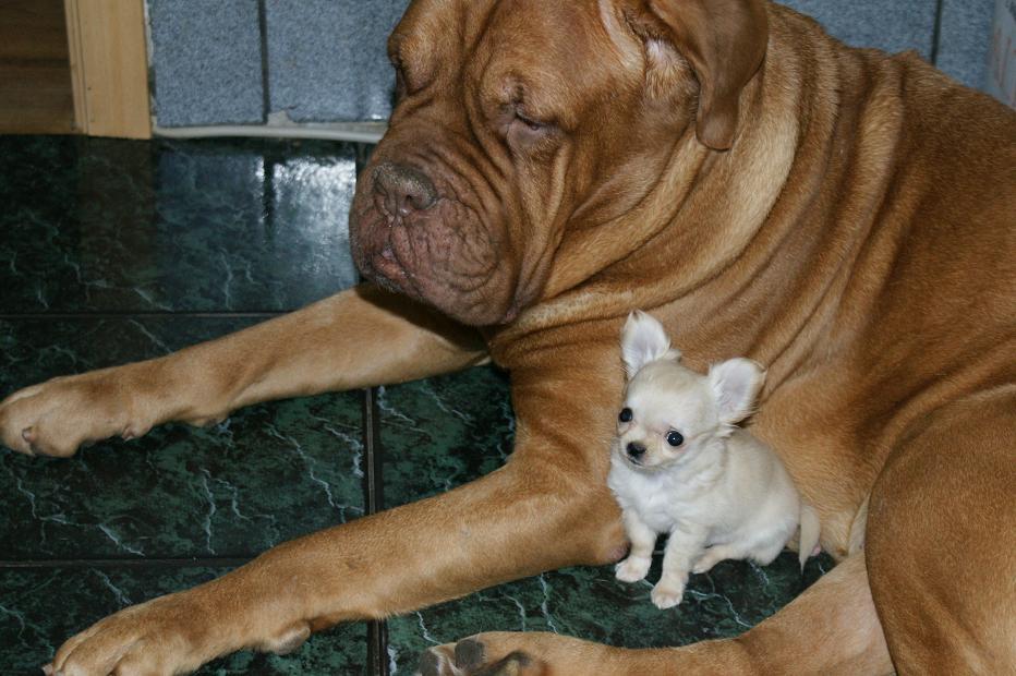 Смотреть смешные картинки про собак с надписями