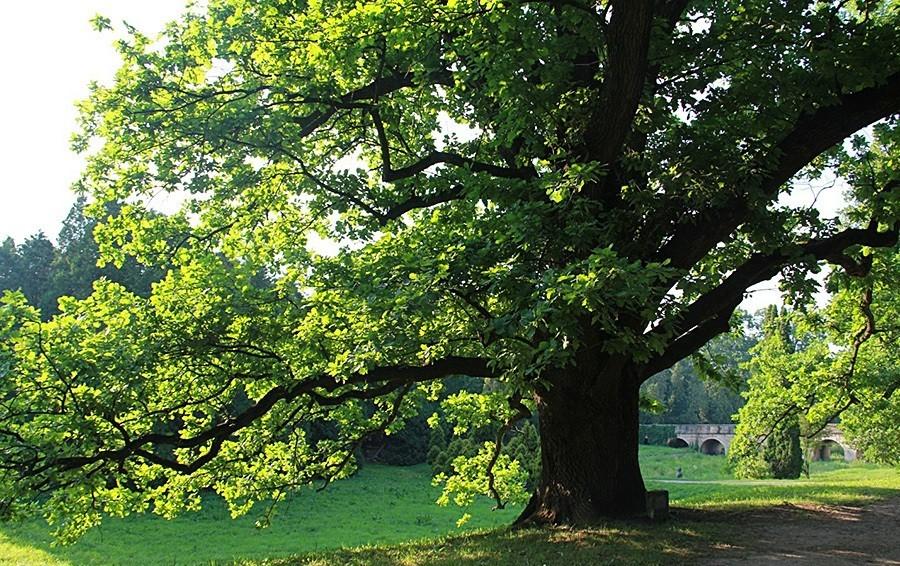 Фотопечать на дереве перегородки баба
