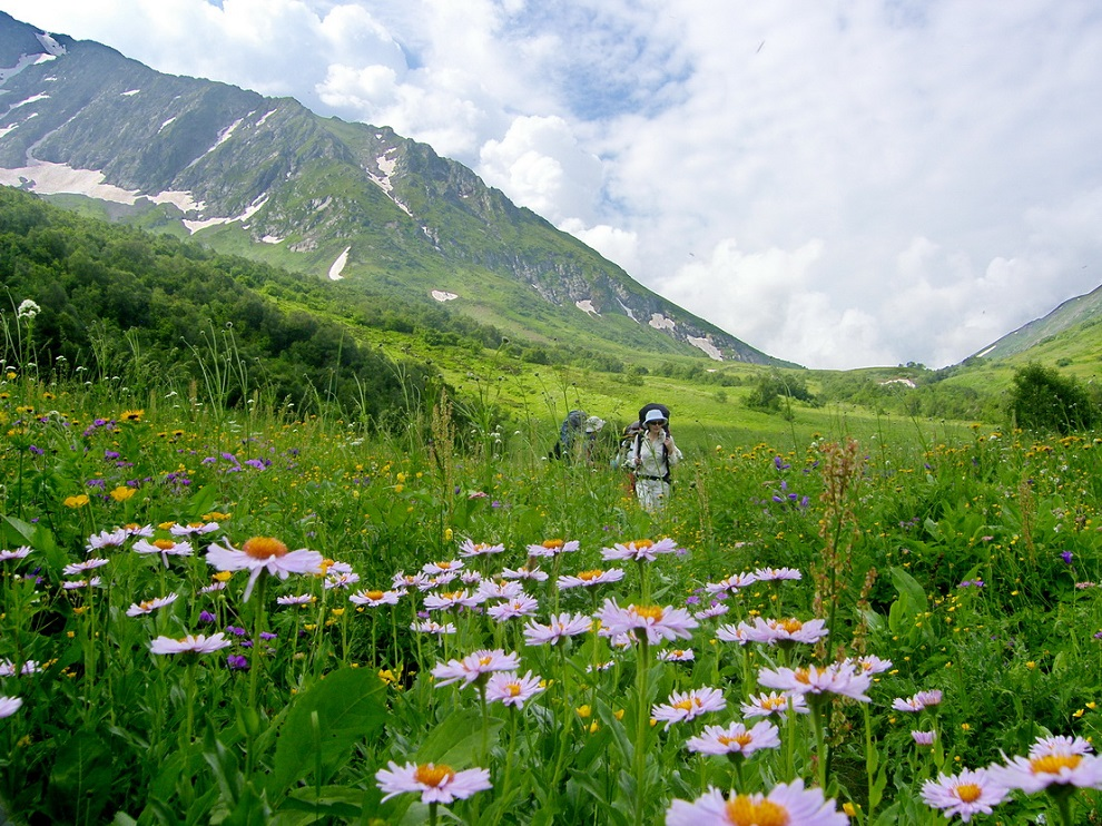 фото альпийского луга бассейн