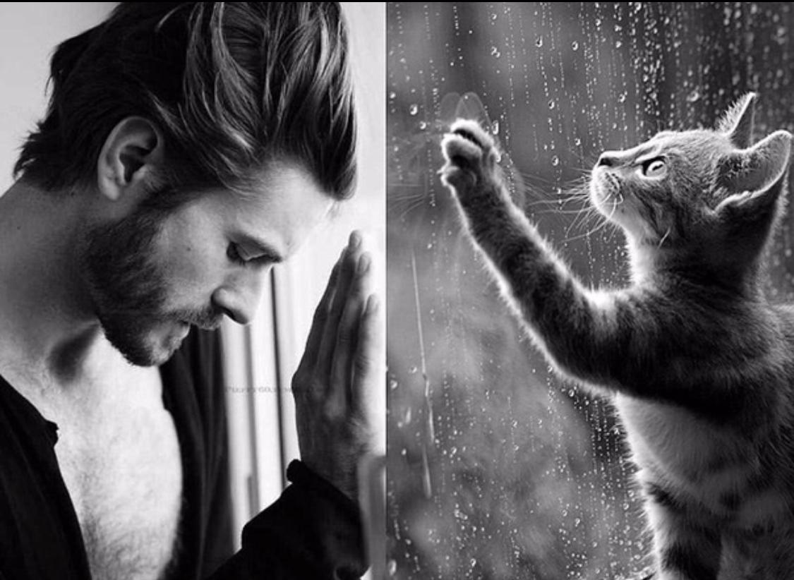 Картинка муж или кот
