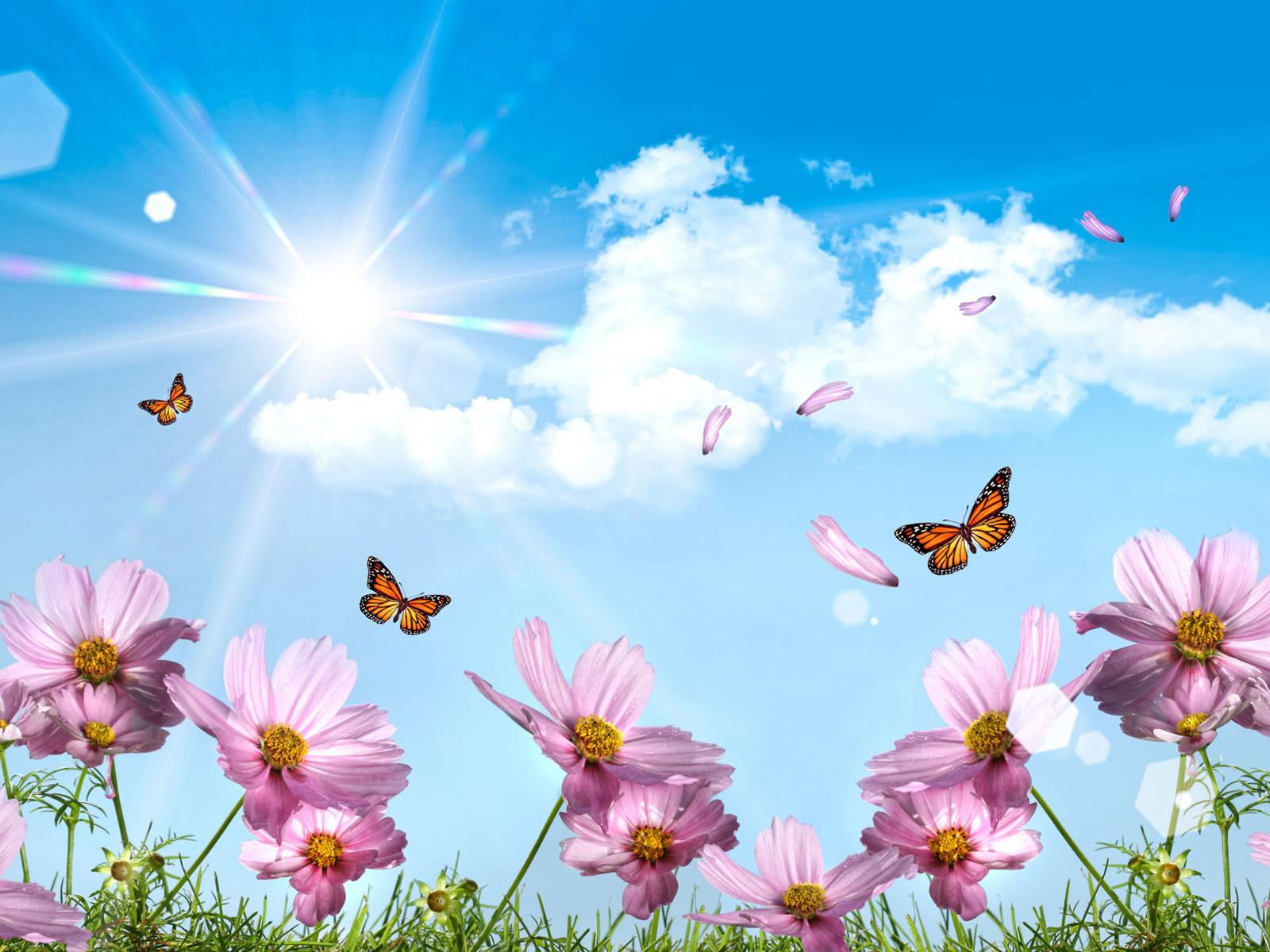 Открытки небо и цветы