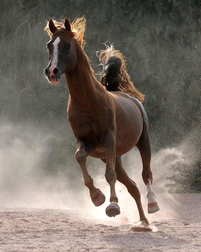 картинки убегаю от коня татьяниным днем поздравляю
