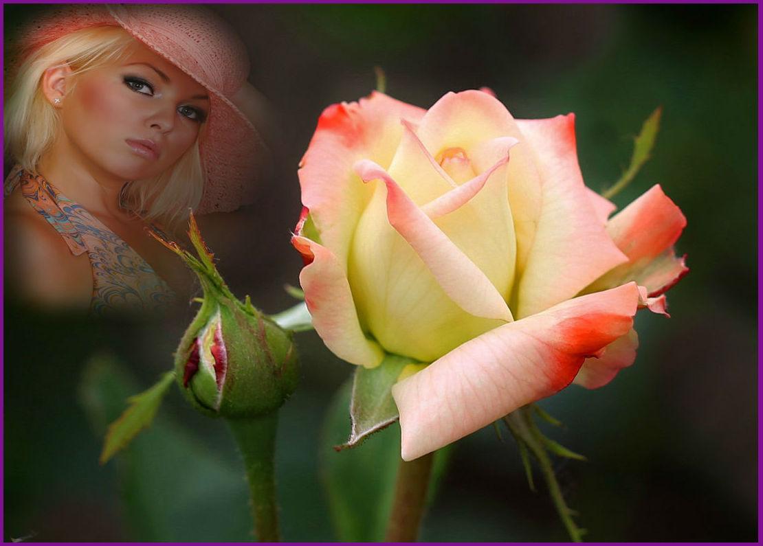 Картинки ты прекрасна как роза