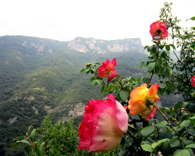 возведения среднего фото роза в горах еще