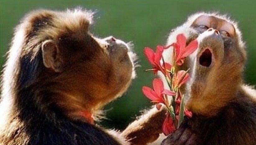 Открытки я пришла обезьяна, юмором отпуск