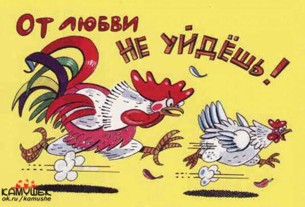 Петух и курица секс